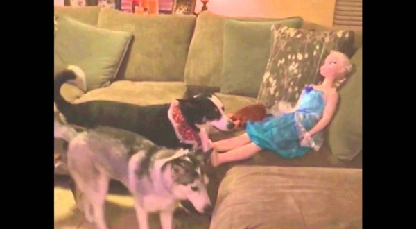 Cute Dog Tries To Play Fetch With Rude Doll (video)