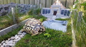 Guy Built An Awesome Miniature Jurassic Park For His Pet Tortoise