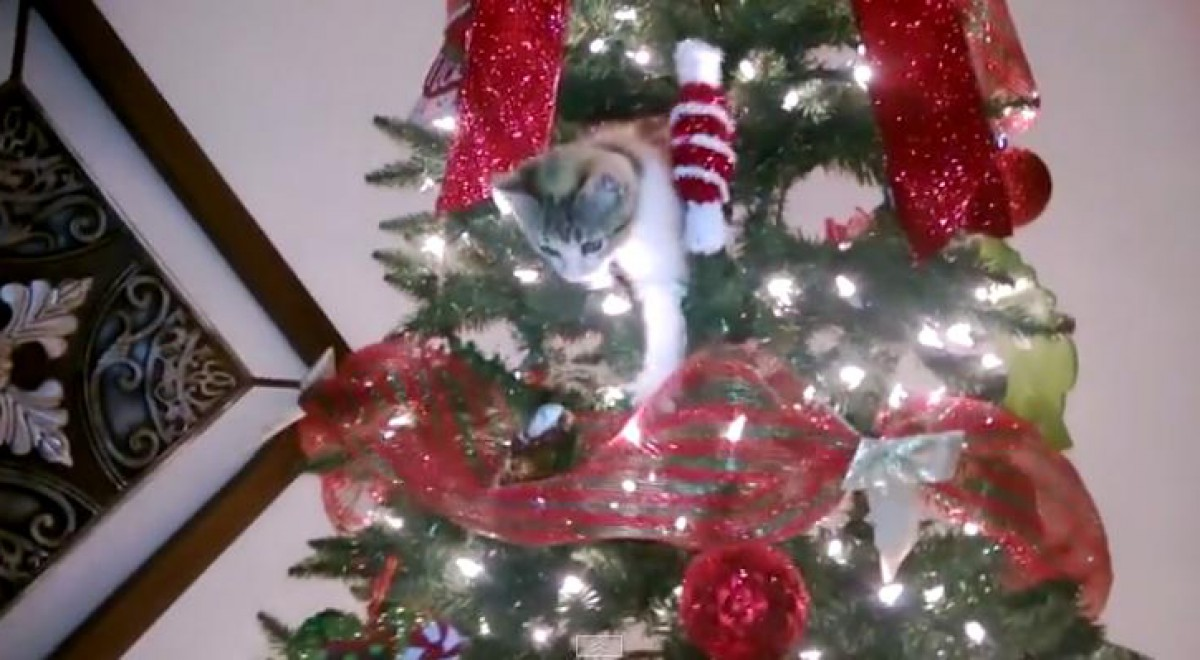 be sure to keep your feline family members far away from the christmas tree - How To Keep Cat Away From Christmas Tree