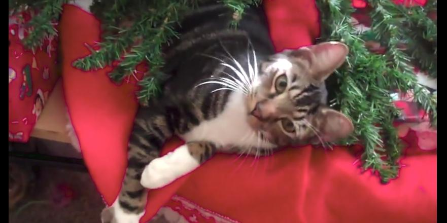 Cats Destroy Christmas Trees & Other Cat Holiday Fails